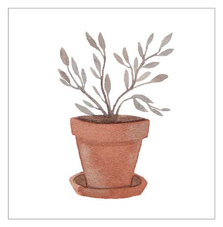 things-plant-web_454.jpg
